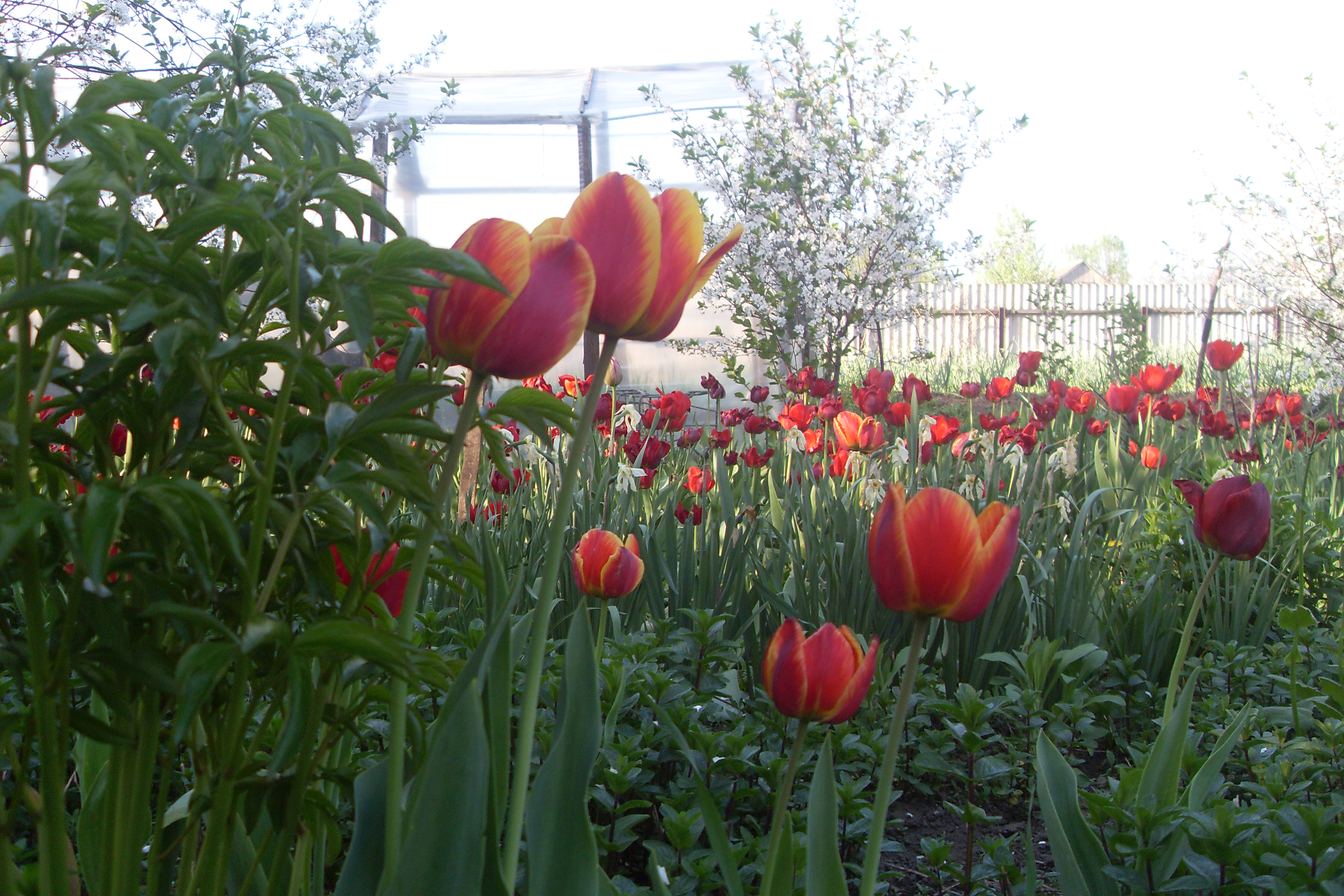 С праздником весны, любви и красоты
